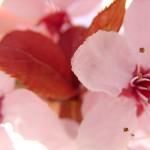 fond ecran 050317 bazas allee en fleurs