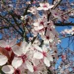 fond ecran 050318 bazas allee en fleurs
