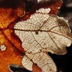 fond ecran 050401 feuille automne