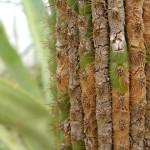 fond ecran 050420 bourghail cactus