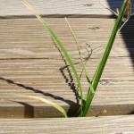 fond ecran 050505 cap homy herbe entre les planches