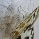 fond ecran 050708 papillon