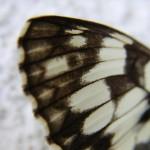 fond ecran 050717 papillon