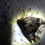 fond ecran 050731 papillon nocturene