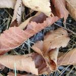 fond ecran 050824 feuilles mortes