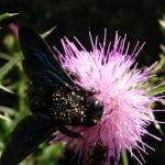 fond ecran 050826 insecte fleur