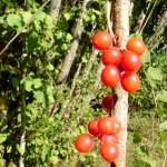 fond ecran 051013 fruits des bois