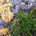 fond ecran 051021 mousse lichen