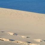 fond ecran 051030 dune pyla