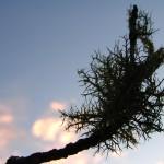 fond ecran 060102 lichen