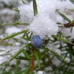fond ecran 060201 neige