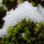 fond ecran 060202 neige