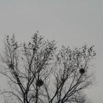 fond ecran 060218 conciliabule oiseaux