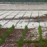 fond ecran 060410 plantation pins beliet
