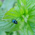 fond ecran 060424 insecte feuille