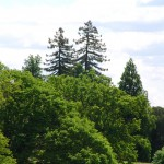 fond ecran 060530 arbres bernos-beaulac