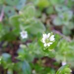 fond ecran 060611 fleurs minuscules