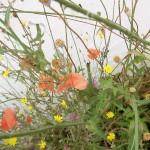 fond ecran 060703 couleurs fleurs