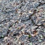 fond ecran 060912 feuilles mortes sol ferriere