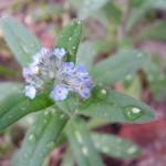 fond ecran 060913 fleur pluie
