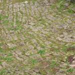 fond ecran 061006 douves chateau villandraut