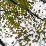 fond ecran 061011 bouge les feuilles