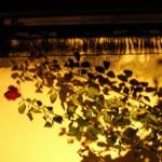 fond ecran 070111 rosier bazas