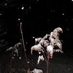 fond ecran 070121 neige