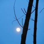 fond ecran 070304 lune pins noaillan