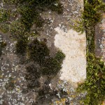 fond ecran 070413 lichens