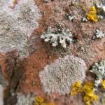 fond ecran 070414 lichens