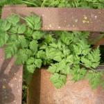 fond ecran 070611 herbes ferraille