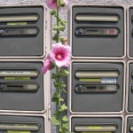 fond ecran 070814 rose tremiere boites aux lettres uzeste
