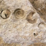 fond ecran 071026 ammonites