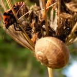 fond ecran 071128 punaise escargot