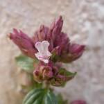 fond ecran 071130 fleurs