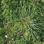 fond ecran 080208 herbe printemps
