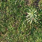 fond ecran 080209 herbe printemps