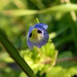 fond ecran 080212 minuscule fleur-visage veronique