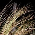 fond ecran 081023 herbes piquet contis