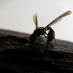 fond ecran 090312 insecte noaillan