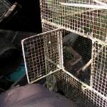 fond ecran 090427 cage oiseaux conte noaillan
