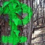 fond ecran 090512 p vert prechac