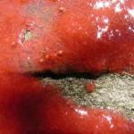 fond ecran 090514 sorbet fraise valentine noaillan
