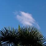 fond ecran 090907 ciel nuage palmier leogeats