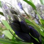 fond ecran 100401 fleur noaillan