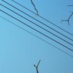 fond ecran 100425 fils electriques branches cadillac