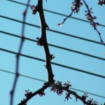 fond ecran 100426 fils electriques branches cadillac