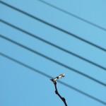 fond ecran 100427 fils electriques branches cadillac