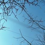fond ecran 100428 fils electriques branches cadillac